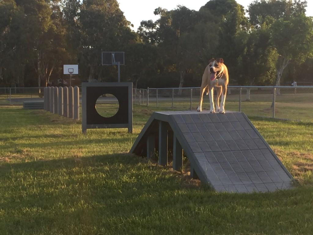 Frascott Dog Park Varsity Lakes